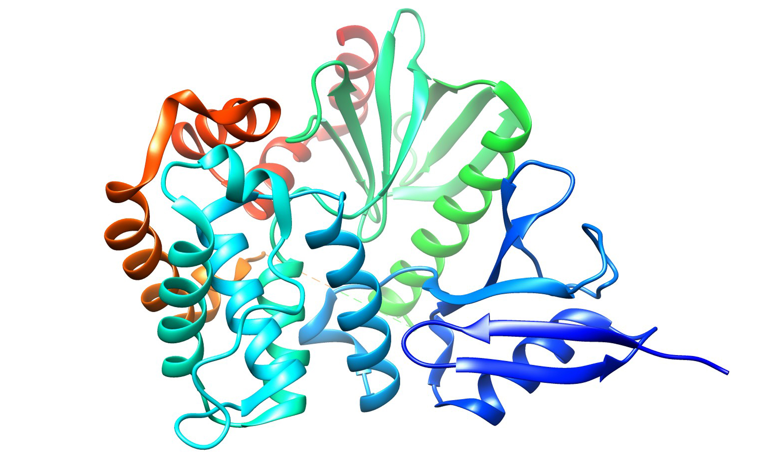 proteins play countless roles - HD2500×1500