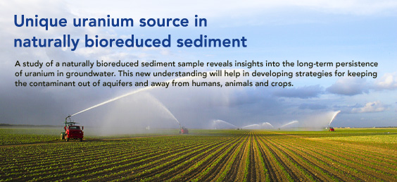 uranium source in natrually bioreduced sediment highlight
