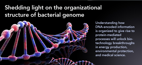 bacterial genome highlight