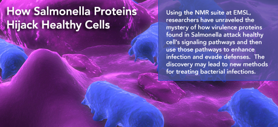 Salmonella Proteins highlight