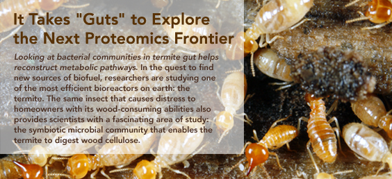 It Takes Guts to Explore the Next Proteomics Frontier