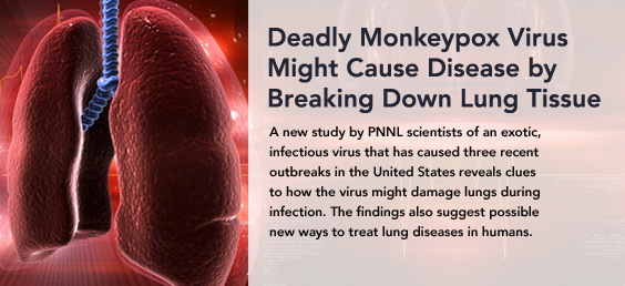 Deadly monkeypox virus might cause disease by breaking down lung tissue