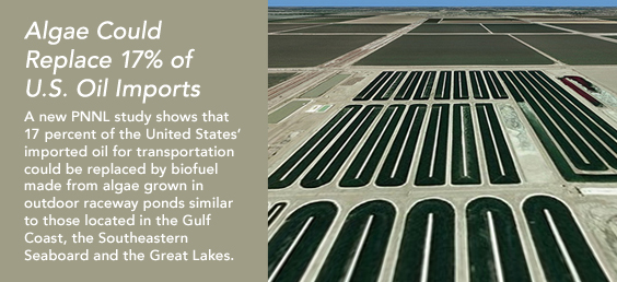 Algae could replace 17% of U.S. oil imports