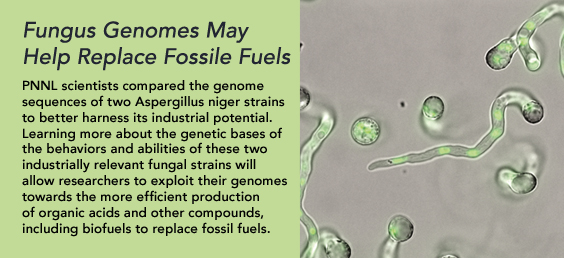 Fungus Genomes May Help Replace Fossile Fuels