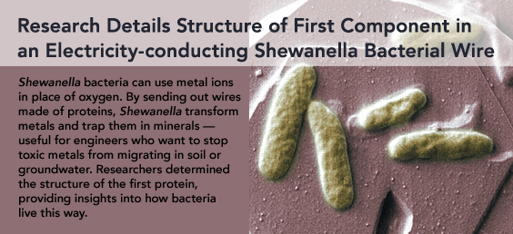 Research Details Structure of First Component in an Electricity-conducting Shewanella Bacterial Wire