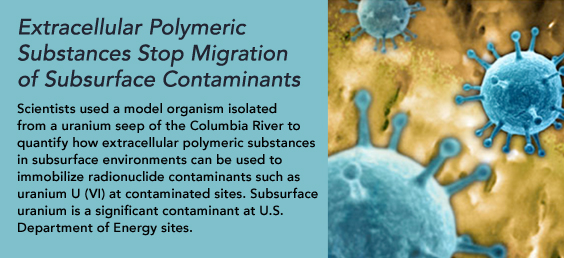 Extracellular polymeric substances stop migration of subsurface contaminants