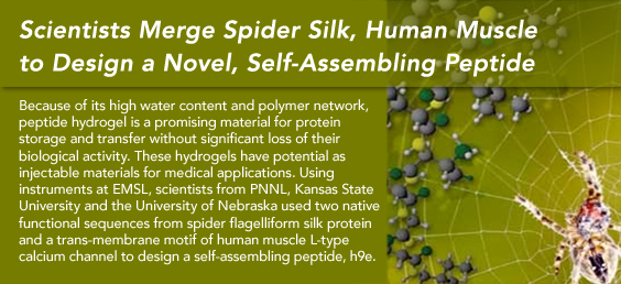 Scientists Merge Spider Silk, Human Muscle to Design a Novel, Self-Assembling Peptide