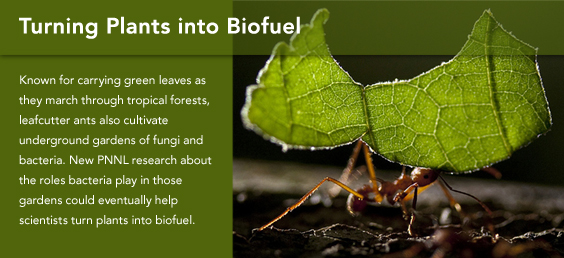 Turning Plants into Biofuels