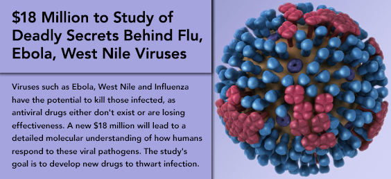 $18 Million to Study Deadly Secrets of Flu, Ebola, West Nile Viruses