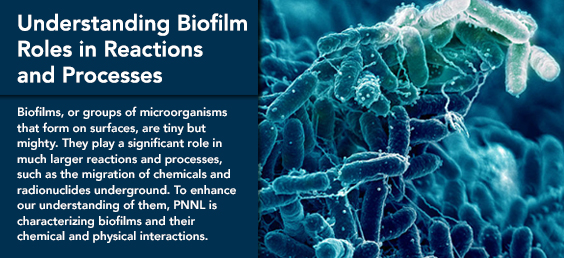 Understanding Biofilm Roles in Reactions and Processes