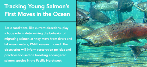Tracking Young Salmon's First Moves in the Ocean
