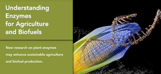 Understanding Enzymes for Agriculture and Biofuels