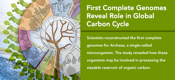 First Complete Genomes Reveal Role in Global Carbon Cycle