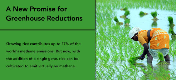 A New Promise for Greenhouse Reductions