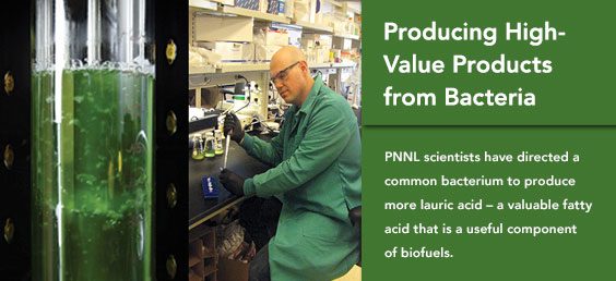 Producing High-Value Products from Bacteria