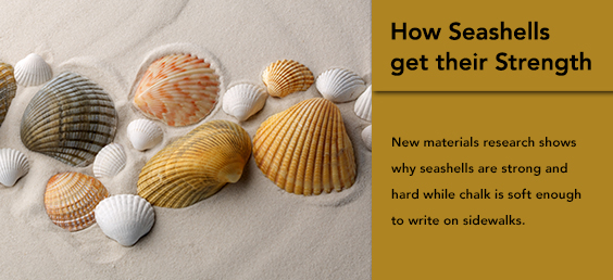 How Seashells get their Strength