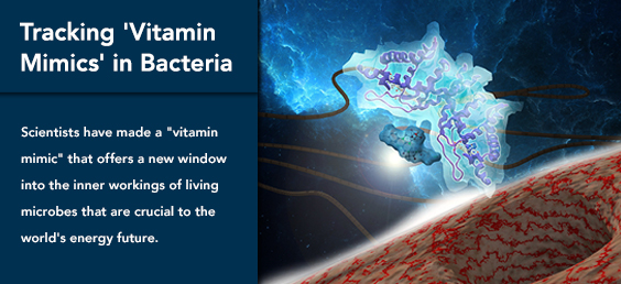 Tracking 'Vitamin Mimics' in Bacteria
