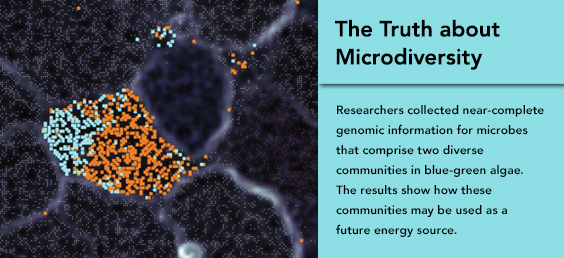 The Truth about Microdiversity