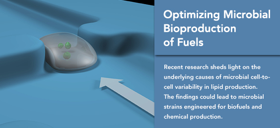 Optimizing Microbial Bioproduction of Fuels