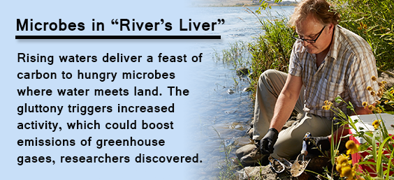 Microbes in River's Liver