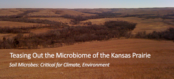 Teasing Out the Microbiome of the Kansas Prairie