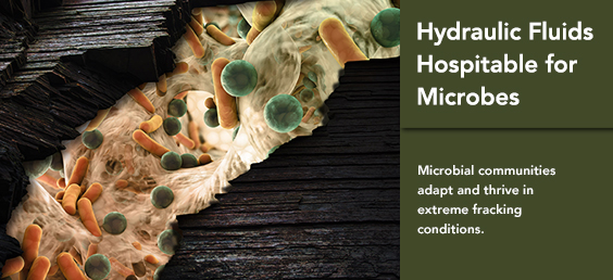 Hydraulic Fluids Hospitable for Microbes