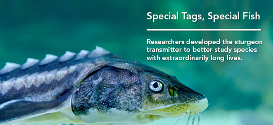Special Tags for Special Fish