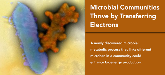 Microbial Communities Thrive by Transferring Electrons