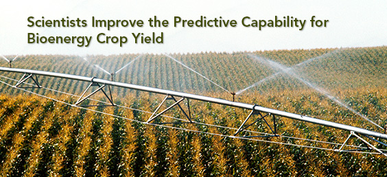 Scientists Improve the Predictive Capability for Bioenergy Crop Yield