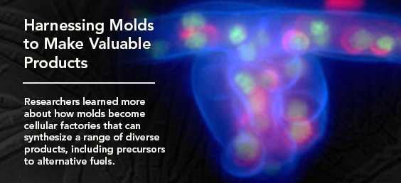 Harnessing molds to make valuable products