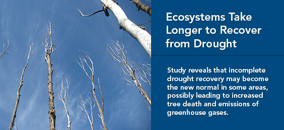 Ecosystems Take Longer to Recover from Drought