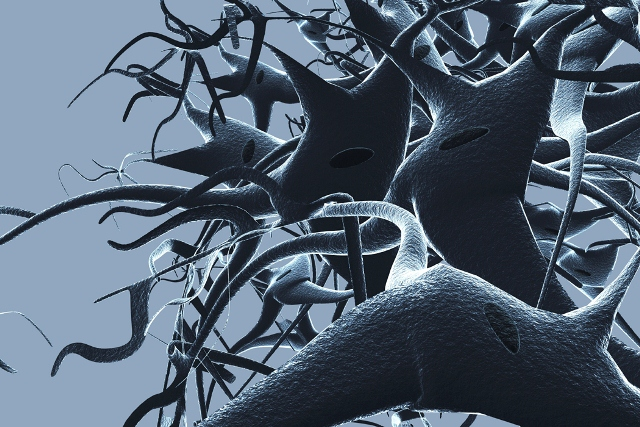 Magnified Image of Nerves