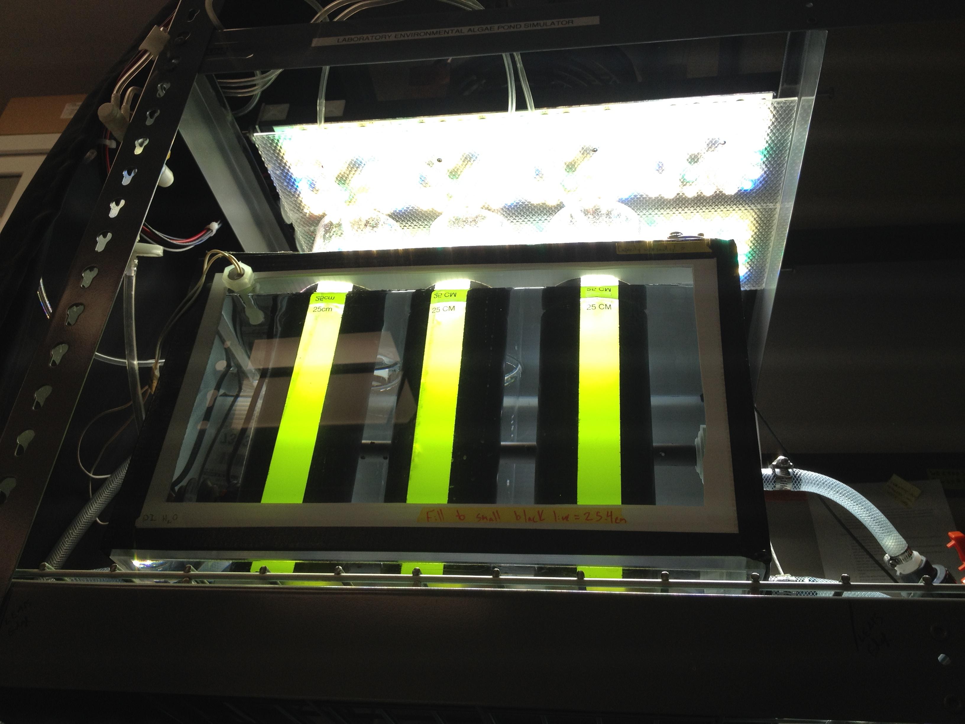 Harnessing top algae strains for bioenergy through collaboration