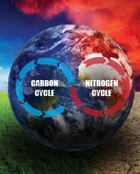 the carbon and nitrogen cycle interact with dynamic vegetation