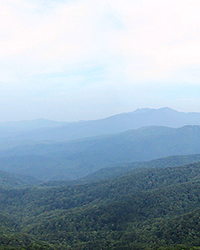 Blue Ridge Mountain haze is isoprene