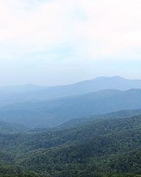 Blue Ridge Mountain haze is isoprene