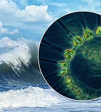 phytoplankton in sea spray