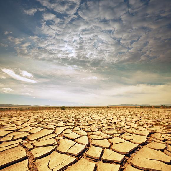 dried landscape