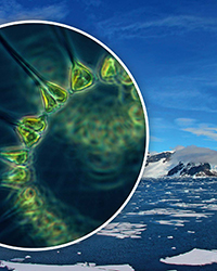 southern ocean phytoplankton clouds