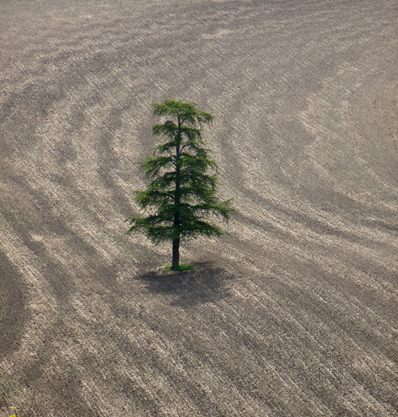 lone tree in the middle of a plowed field