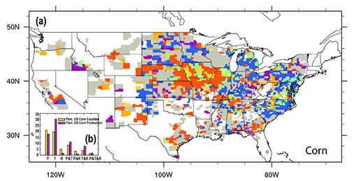 corn variability