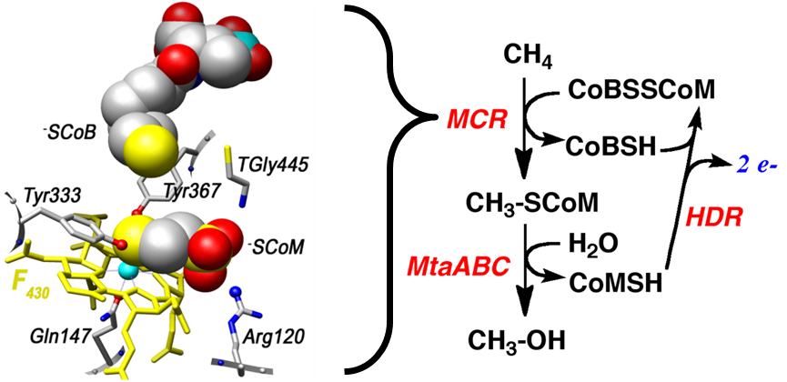 MCR catalyzing methane into methanol