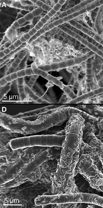 microscopy images of microbes