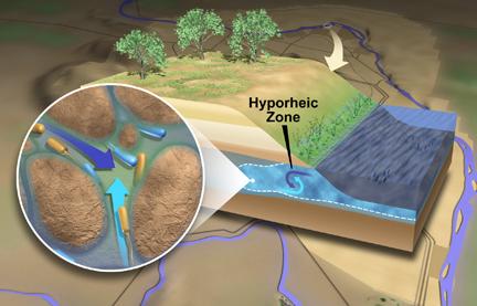 James Schematic of hyporheic zone