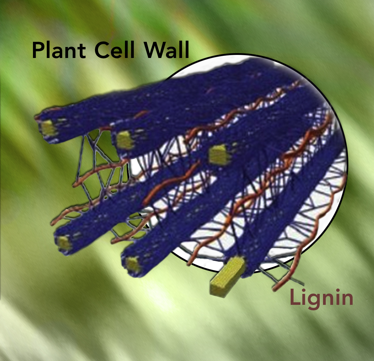 Cartoon of lignin