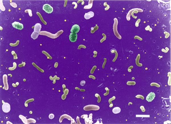 Lipton_bacterioplankton