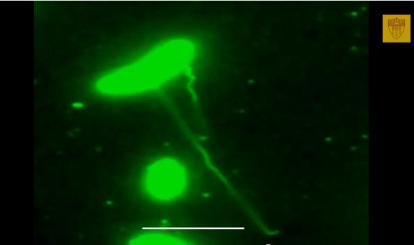 Image of nanowires