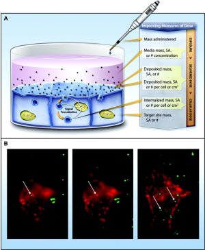 Nanoparticle example and fluorescence tagged images