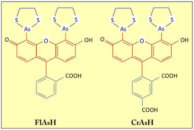 structures of fluorophores