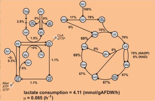 lactate consumption